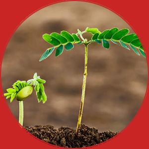 Virksomhedsblog: Få styr på disse 6 ting og få bloggen til at gro
